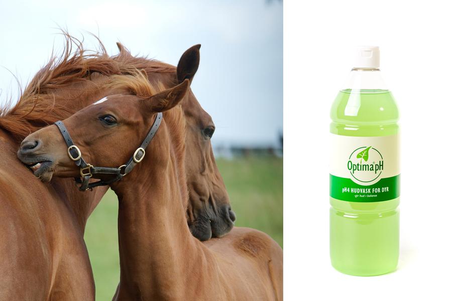 Hest-w900