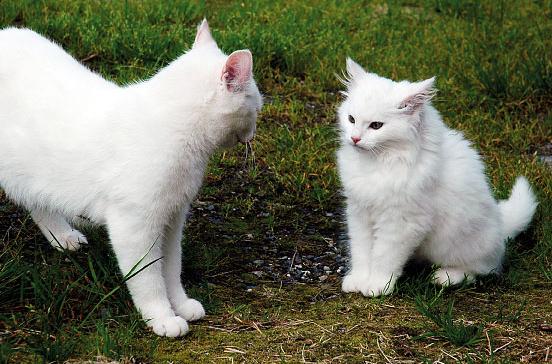 slide9_optima-dyr-katt